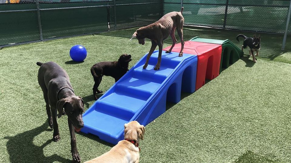 image of three dogs playing on top of turf field