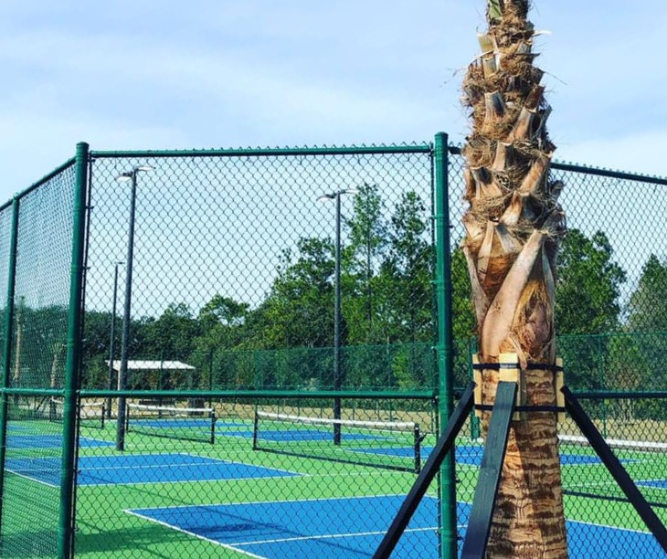 image of pickleball court enclosed in fencing with palm tree to the right