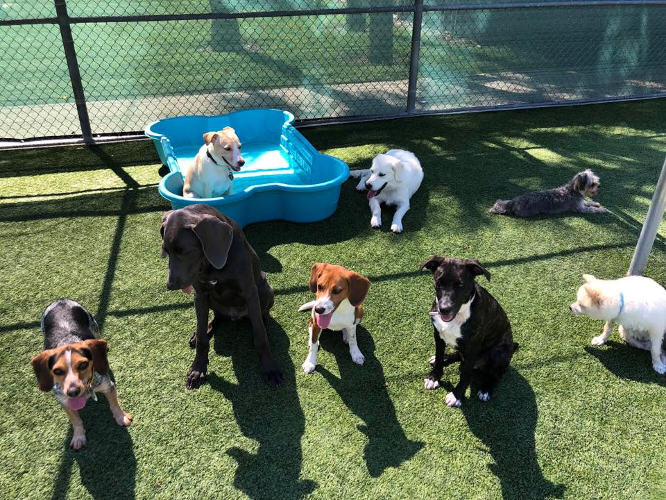 image of multiple dogs sitting on top of turf field