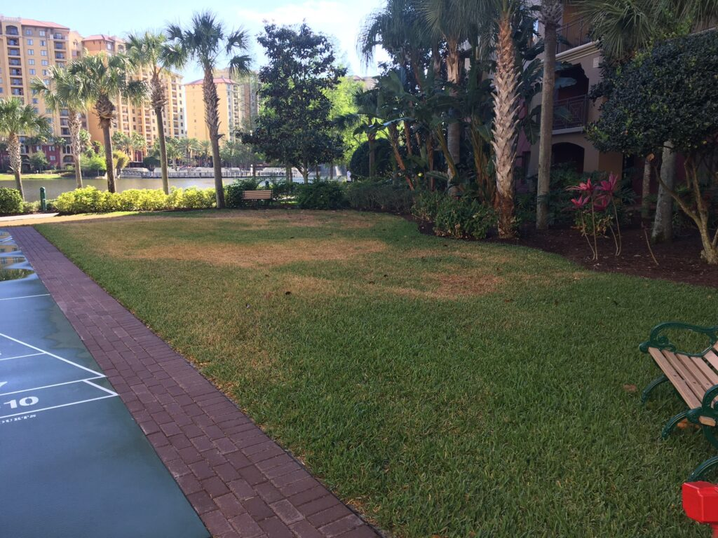 lot of open land with tree perimeter before turf installation